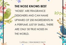 Le Reve Fragrance Facts / Discover interesting fragrance facts you need to know.