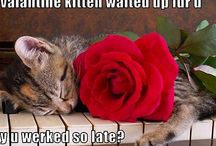 Valentine Cats / by Cat Wisdom 101