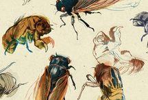 Cicadas...
