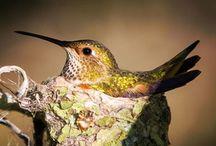 I love Humming Birds / by Laura Norton-Busuttil