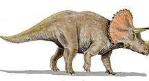 """Triceratops / Vivió en el Cretácico superior y su nombre significa """"Cara con tres cuernos""""."""