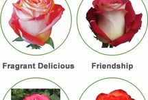 Wedding Flowers / Exclusive Roses for Wedding Flowers