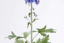 botanic_atlas