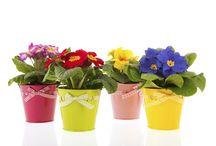 NOS ENCANTAN LAS FLORES / Nos encantan las flores de todos los tamaños y colores.