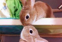 Cute Animals & Pets / by Geraldine 제랄딘