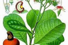 Propiedades de las semillas / Propiedades de las semillas