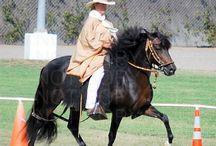 Peruvian Horses / by Judy Paso