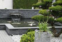 Moderne Tuin / Deze tuin is modern en strak. De prachtig gestileerde Bonsai combineert goed met de sobere tinten van de bestrating en het felle blauw van het zwembad. De vijver heeft behalve stoere steenstrips ook een waterval en waterlelies.  Deze tuin is aangelegd door: De Lingebrug hoveniers!
