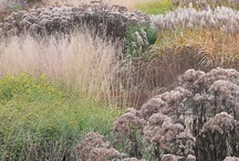 Planting Design / Planting, planting combinations, planting design and interesting plants.