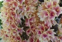 tros orchideeën