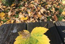 Sonbaharın Mücizelerini Keşfet