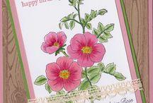 SU Sweatbriar rose