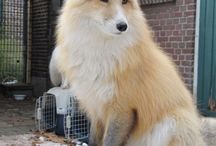 Fox ♛