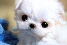 cute animals / Roztomilých zvířátek