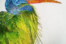 millie marotta coloring book