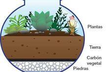 Plantas / Trabajos de jardinería