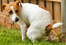 Grandmas home remedies for dogs constipation