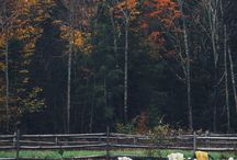 autumn_heart