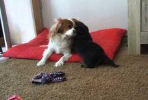 Honden Filmpjes / Leuke filmpjes van onze honden en pups