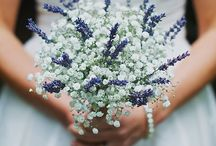 lavender and babys breath