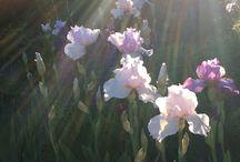 Freiraum! / Garden and flowers