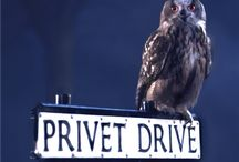 No. 4 Privet Drive / Harry and the Dursleys