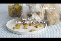 How To Make Pumpkin Dog Treats