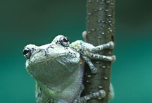 Froggies / by Aurora Canales