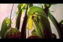 Pflanzen Wissen