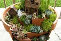 plante grasse