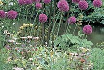 Plant/Flowers / by Joyce Wilks