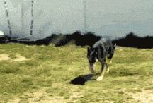 Funny Gifs / Best Funny Gif Animations...