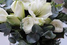 Kukkakimppuja