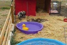Pig Playhouse