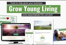 Managing a Young Living Team
