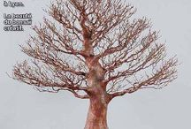 OutDoor Landscape MAG / http://www.worldarchitectslibrary.com/