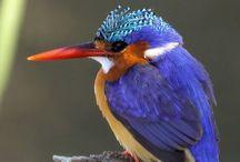 Birds photos♫ ♪ ♥●•٠·˙ ☯