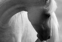 Nature Passion - Horses / by Nina Rivas