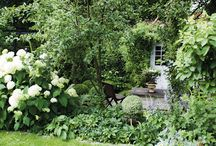 Tuinborders en planten