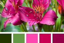 Mariage colors