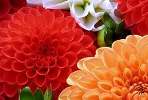 λουλουδια φυτα