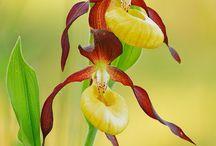 pasta de orquídeas