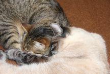 Poezen/cats