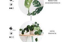 Pflanzen Inside