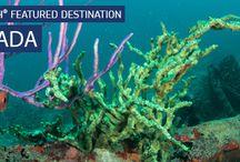 Carriacou Diving