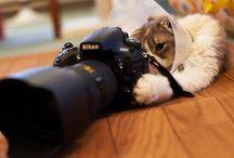 Учимся фотографировать и обрабатывать фотографии