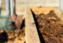 Veggie & seedling garden