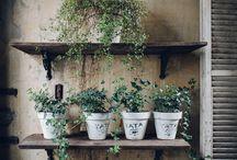 Déco plantes / House plants / Inspirations : bouquets, plantes en pot, la nature dans la maison , plants at home , du vert , green home , balcon , balcony , jardin d'hiver