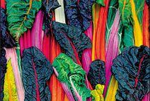 Food: veggies / by Renee Rogers