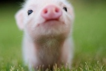 Cute Animal Picts / by Camille Baldwin